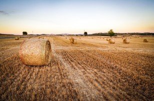 Farming crops with rocks to reduce CO2 and improve global food security