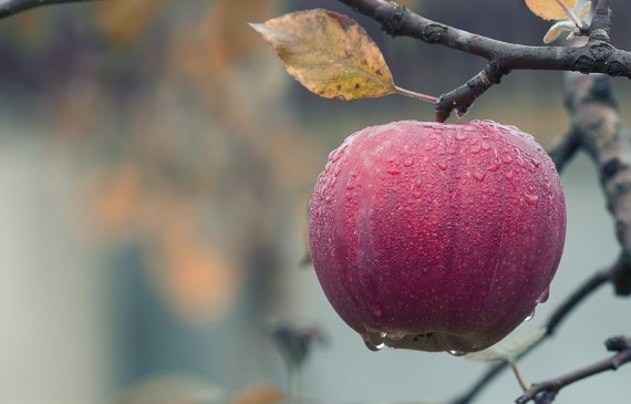 What is a better way to wash pesticides off apples?