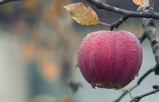 Find a better way to wash pesticides off apples?